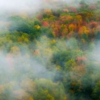 Fall Foliage Berkshire